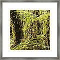 Ferns And Moss Framed Print