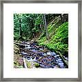 Ferns Dancing By The Creek Framed Print