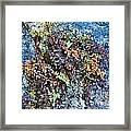 Ferns On Cliffside Framed Print
