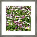 Field Of Flowers Framed Print by Deborah Montana