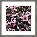 Field Of Lavender Framed Print