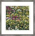 Field Of Pretty Flowers Framed Print