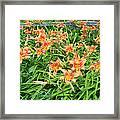 Field Of Tiger Lilies Framed Print