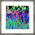 Field Of Tulips - Photopower 1496 Framed Print