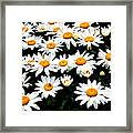 Fields Of Daisies Framed Print