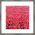 Fields Of Tulips Alkmaar Vicinity Framed Print