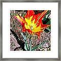 Fiery Beauty Framed Print