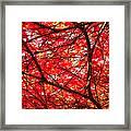 Fiery Maple Veins Framed Print