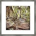 Filtered Forest Framed Print