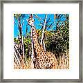 Find The Giraffe Framed Print
