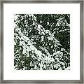 Fir Tree Branch Covered With Snow  Framed Print