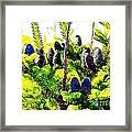 Fir Tree Buds Abstract Framed Print