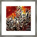 Fire In The Corn Field Framed Print