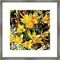 First Crocus Serenade Framed Print