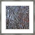 First Snow 4 Framed Print