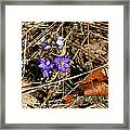 First Spring Flowers Framed Print