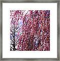 First To Flower Framed Print