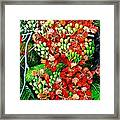 Flamboyant In Bloom Framed Print