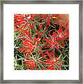 Flaming Zion Paintbrush Wildflowers Framed Print