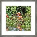 Flamingo Island Framed Print