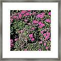 Floral Afternoon Framed Print