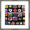 Floral Composite Not For Sale Framed Print