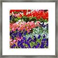 Floral Fantasy Framed Print by Dan Sproul