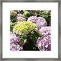Floral Pink Lavender Hydrangea Garden Art Prints Framed Print
