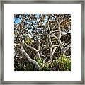 Florida Scrub Oaks Painted   Framed Print