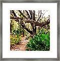 Florida Woods Framed Print