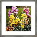 Flower - Antirrhinum - Grace Framed Print by Mike Savad