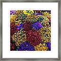 Flower Bed Across The Street From The Grand Palais Off Of Champs Elysees  Framed Print