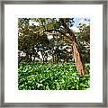 Flower Field - South Western Australia Framed Print