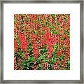 Flower Garden 34 Framed Print