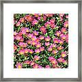Flower Garden 36 Framed Print