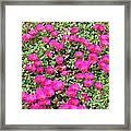 Flower Garden 38 Framed Print