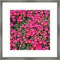 Flower Garden 39 Framed Print