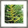 flower Helicnia Framed Print