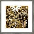 Flower In Sepia Framed Print