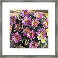 Flower Of Fall Framed Print