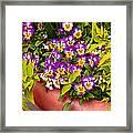 Flower - Pansy - Purple Posies  Framed Print by Mike Savad