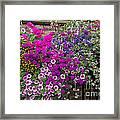 Flower Riot Framed Print