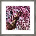 Flower - Sakura - Finally It's Spring Framed Print by Mike Savad