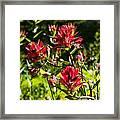Flower Framed Print by Scott Gould