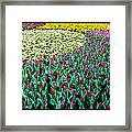 Flower Sea Framed Print