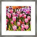 Flower Splash IIi Framed Print