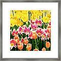 Flower Splash Ix Framed Print