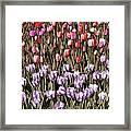 Flower Splash Vi Framed Print