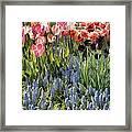 Flower Splash Viii Framed Print