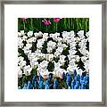 Flower Splash X Framed Print